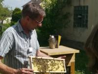 Lehrerfortbildung: Bienen und Bionade