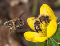 Bienen und Bionade